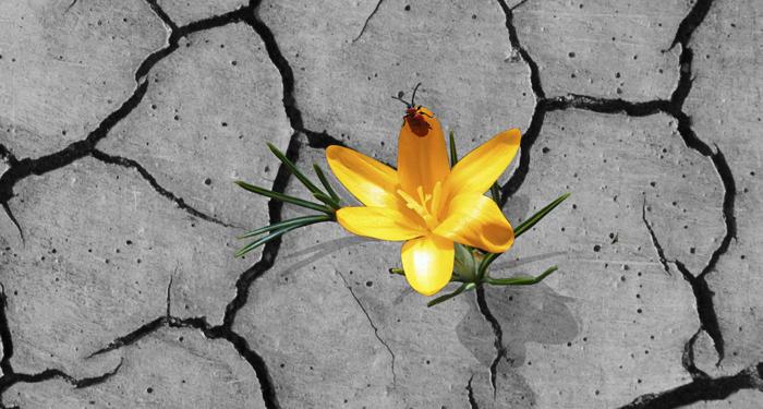 ¿eres resiliente?